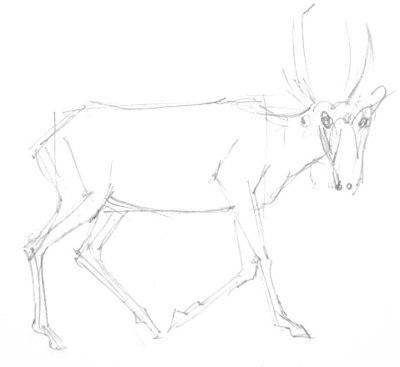 Сайгак рисунок карандашом